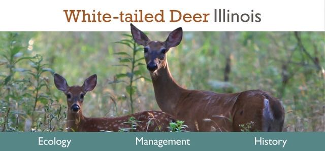 A link the Living with White-tailed Deer web site with advertisements for its three sections: ecology, management, and history.